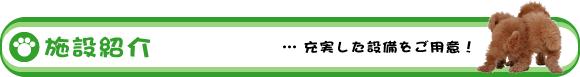 沖縄ペット葬儀 ピクシーワン オフィシャルページ