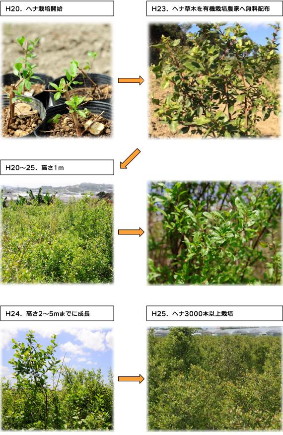 オーガニック琉球ヘナ栽培6年の記録