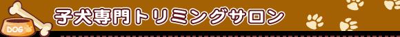 ティーカッププードル・トイプードル 専門ブリーダーサンキュー